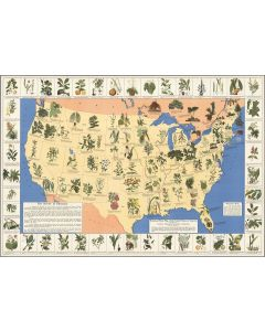 Medicinal plant map of the United State, 1932